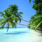 Быт на Мартинике